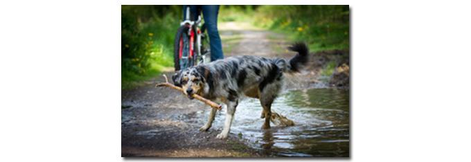 honden_beweging