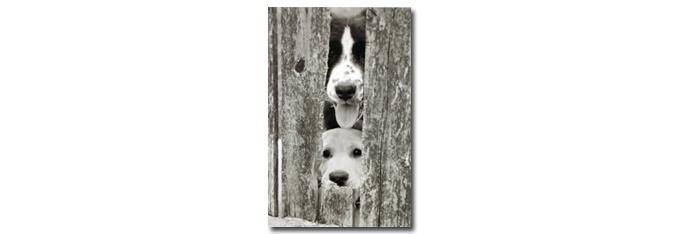 honden_intro