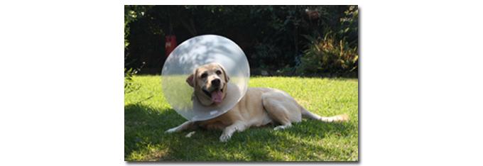 honden_medisch