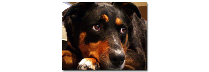 honden_thuis