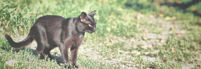 katten_algemeen