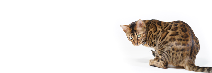 katten_info