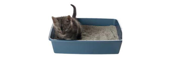 katten_kattenbak