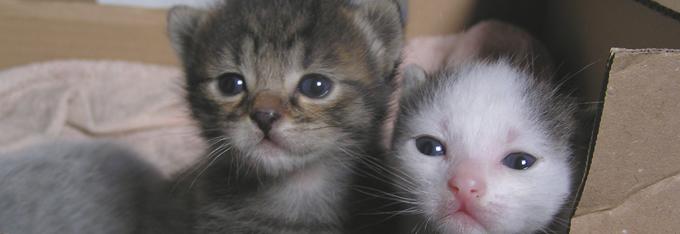 katten_kittens