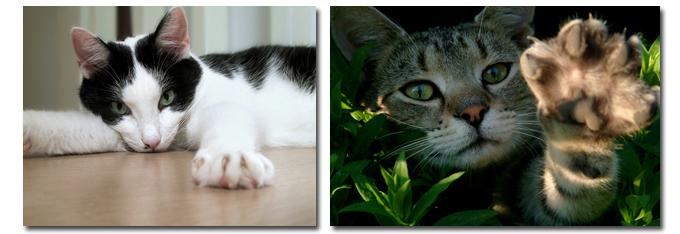katten_krabbelen