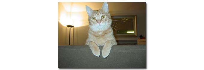 katten_vakantie