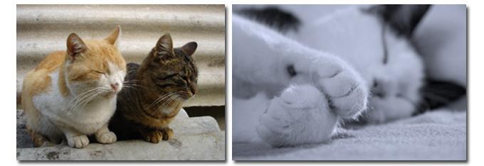 katten_verzorging