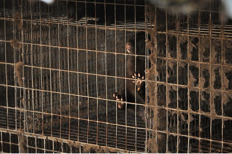 nertsen animal rights 2