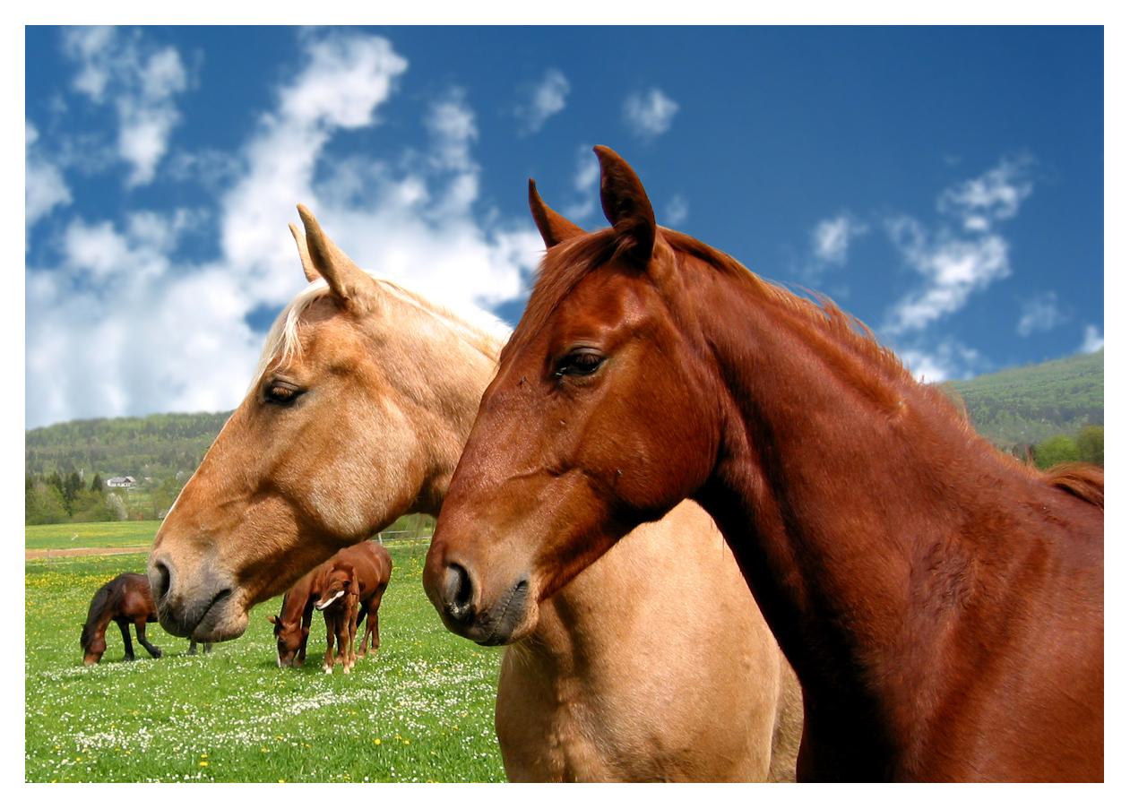 Horses free images Spela Andolsek2