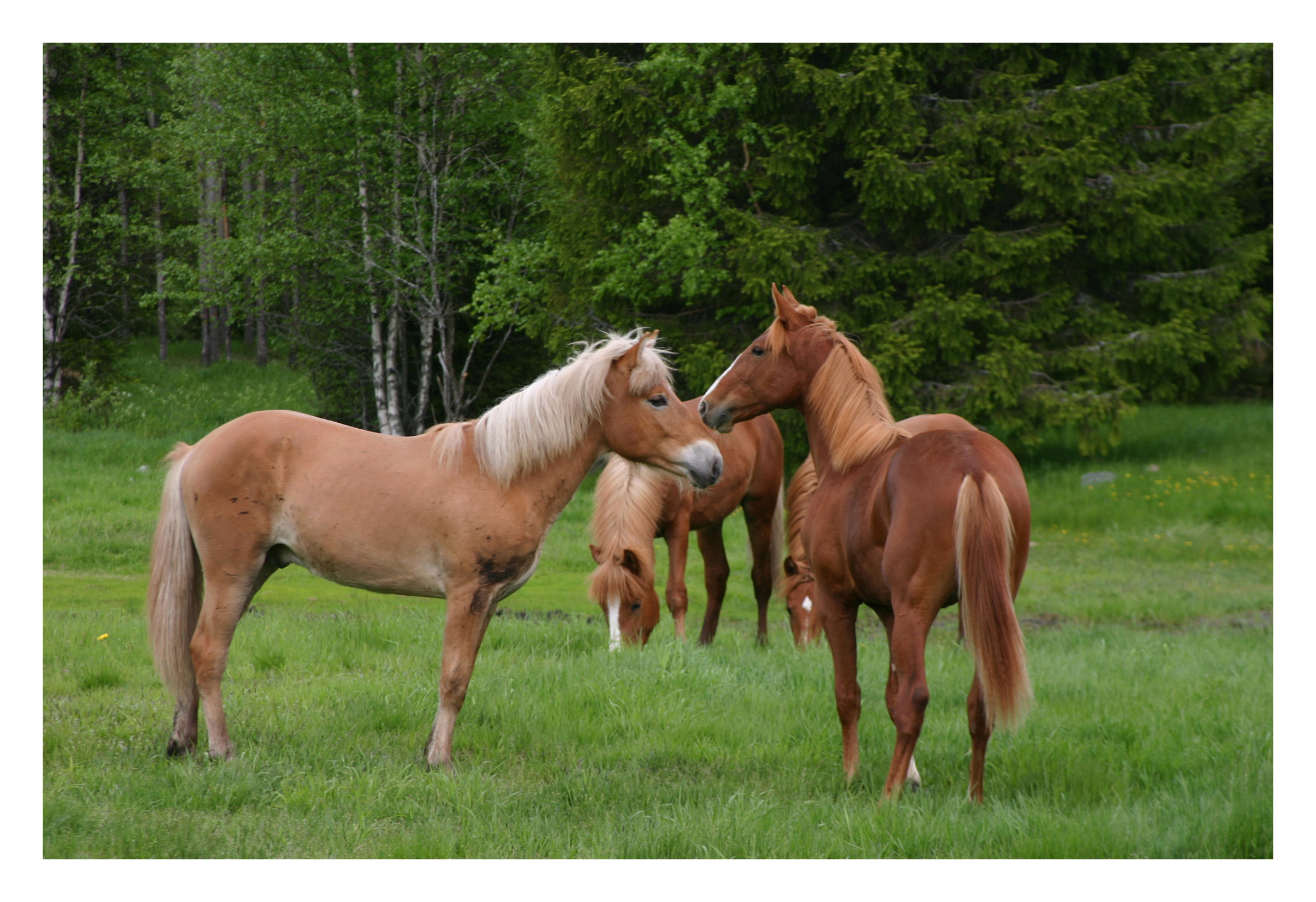 horses free images2