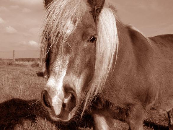 pony-1518772